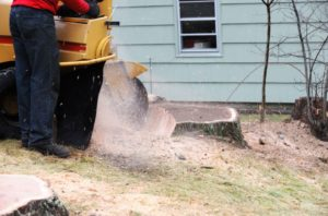 Highlands-County-Stump-Grinding